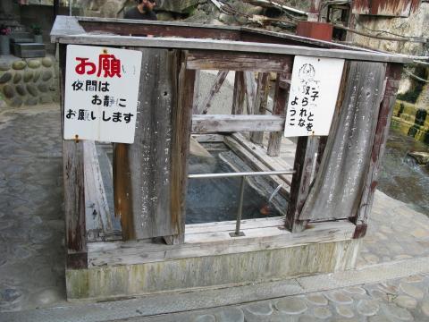 0410sakura3.jpg