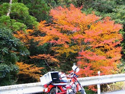 201209kasagi2.JPG